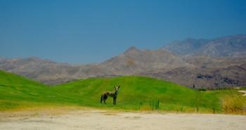 Wildlife in Palm Springs