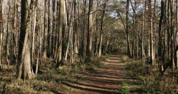 forest-trail-road-in-forest