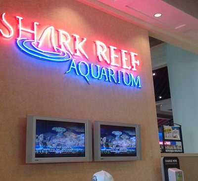 Visiting the Shark reef in Vegas