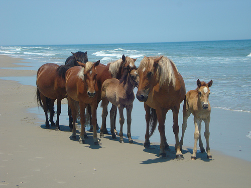Wild horses, Credit flicker