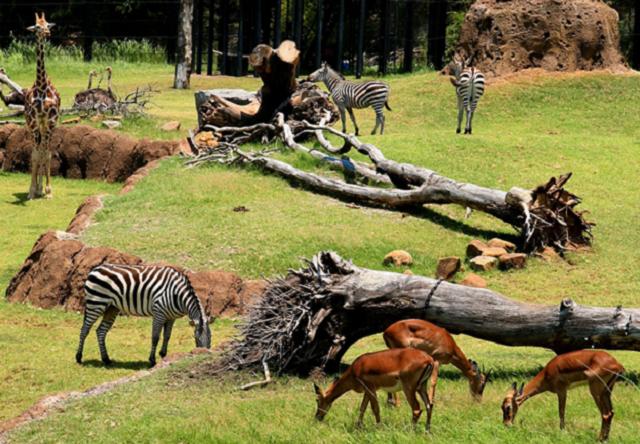 Dallas Zoo, credit-Dallas Zoo