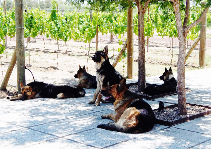 Guardians of the Vineyard