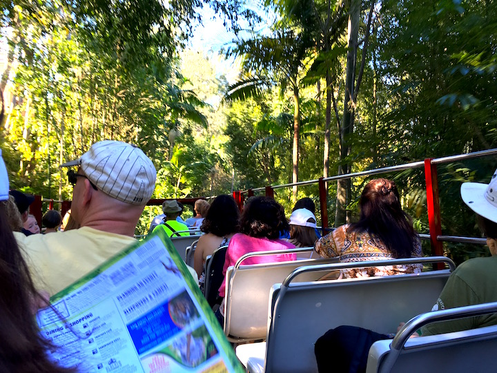 Touring the zoo by guided tour bus