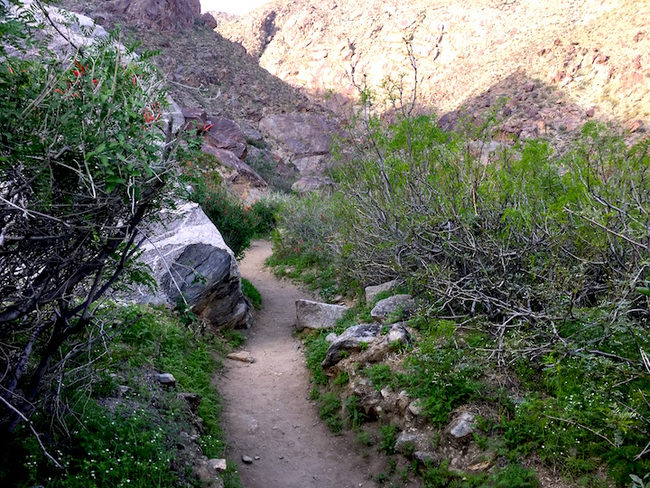 Shaded path of the hike