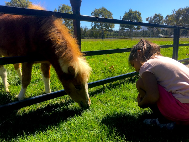 Kids in love with horses