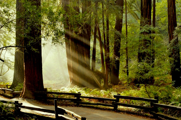 Muir Woods, Credit- askmissa