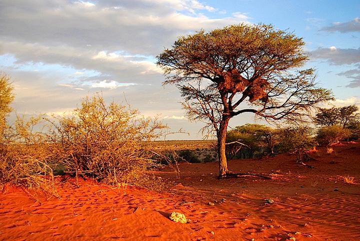 Namibia-Kalahari-Desert
