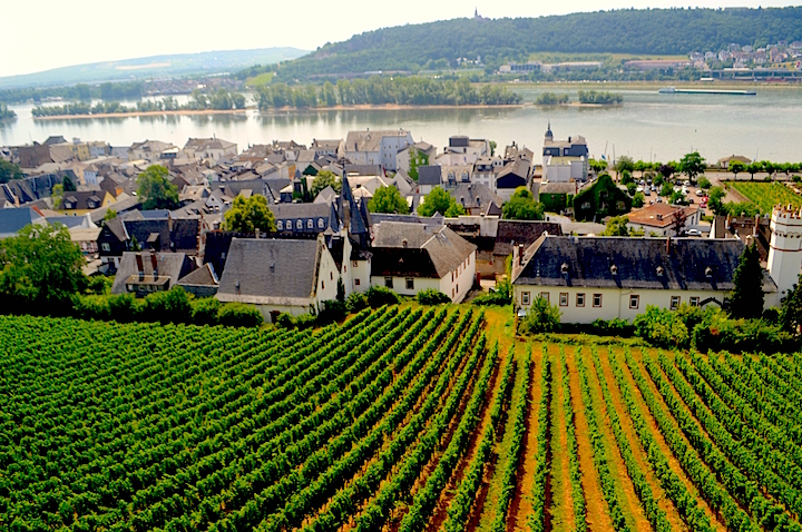 Vineyards in Rudesheim