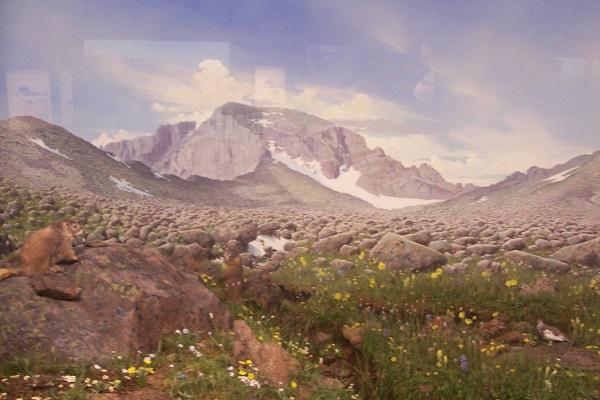 Longs Peak Boulder Field