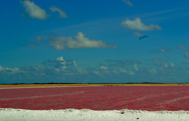 Pink ponds in Bonaire Yes!