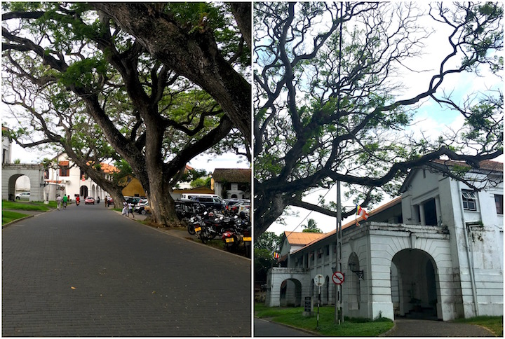 Calm Streets and with massive trees in Fort