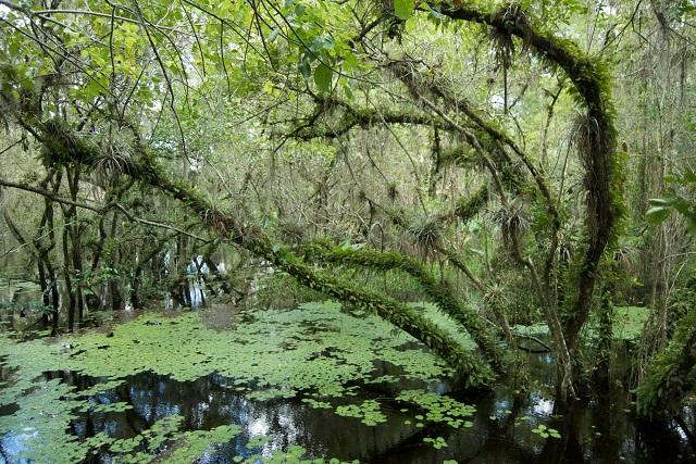 Florida Evrgladers, Credit-treviscarletta.com