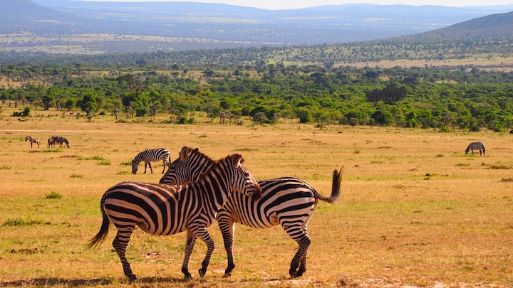 5 reasons to choose Kenya for your next holiday