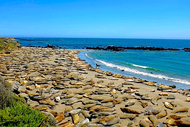 Piedras Blancas beach, credit edeltrips.com