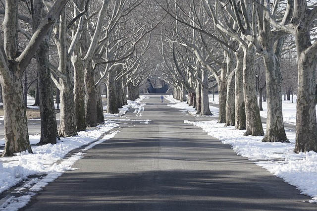 tree-lined-1476635_640