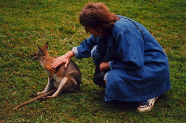 saying hallo to a wallaby in Australia